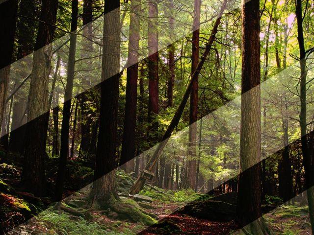Grado Superior de Gestión Forestal y Medio Natural