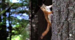Ciclo Formativo Grado Superior en Gestion Forestal y del Medio Natural Online