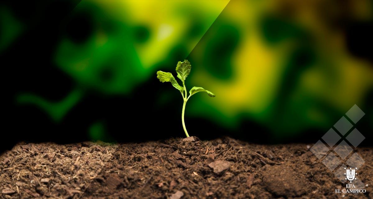 Curso Gratuito se Semilleros en agricultura